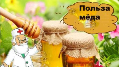 Как правильно есть мёд для здоровья.